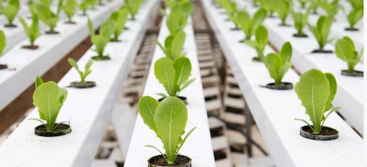 กรมส่งเสริมการเกษตร สนับสนุนพัฒนาธุรกิจ เกษตรเชิงนวัตกรรม