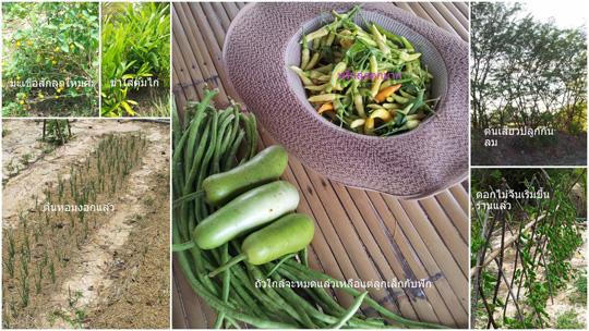 ยุคสินค้าแพง เกษตรคุณภาพคือโอกาส