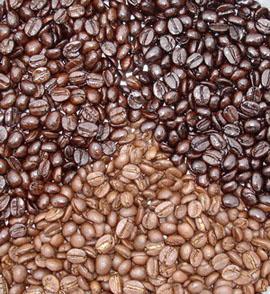 กาแฟ เมล็ดกาแฟ การปลูกกาแฟ