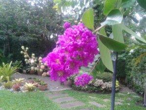 ดอกม่วงส่าหรี